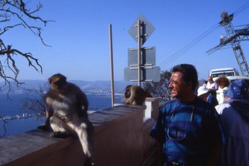 Gibilterra-e-le-sue-scimmie