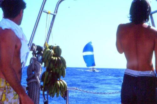 le-banane-appese-durante-la-regata-Panama---Galapagos-1994