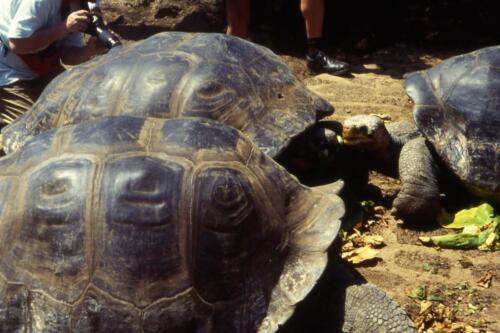 tartarughe-e-a-Galapagos