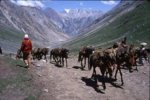 I cavalli di ritorno dalla Grotta di Amarnat.