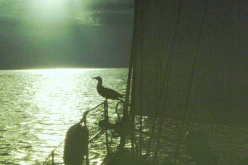 La-sula-ha-chiesto-un-passaggio-con-pernottamento-per-Galapagos
